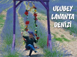 Ulubey Lavanta Denizi